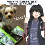 犬とHDD
